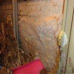 Mérule dans une cave à Ixelles